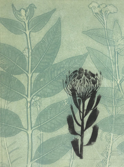 pincushion protea, green, original artwork on paper by Trudy Rice.  Made in Melbourne