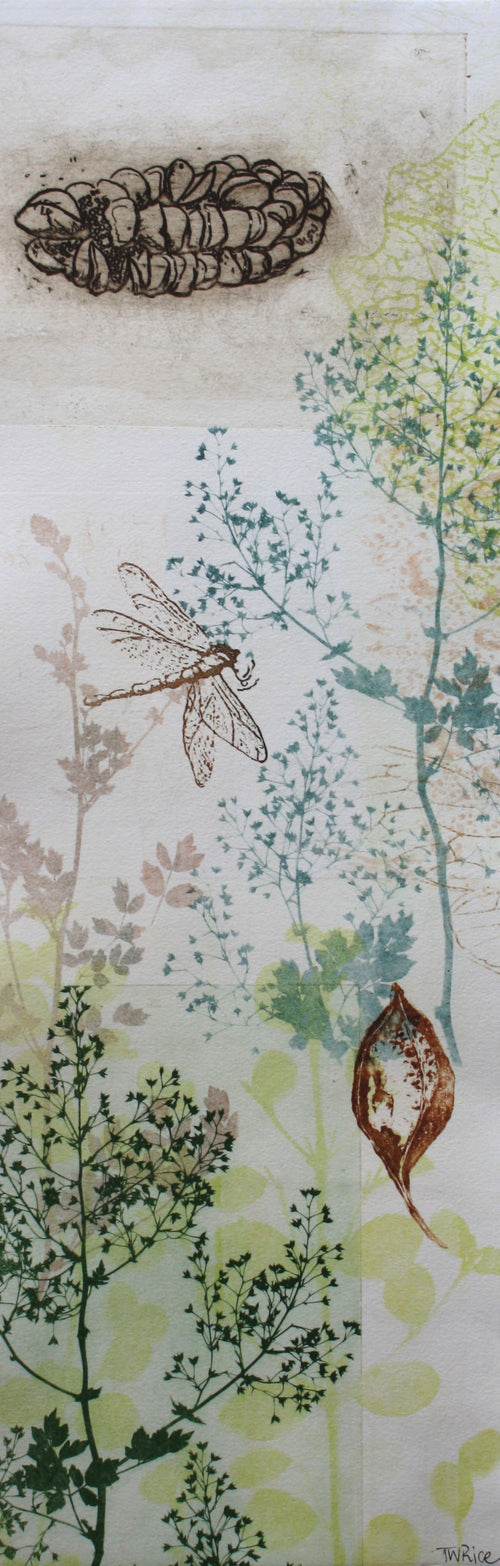 ARTWORK Small Dragonfly Banksia Pod and foliage