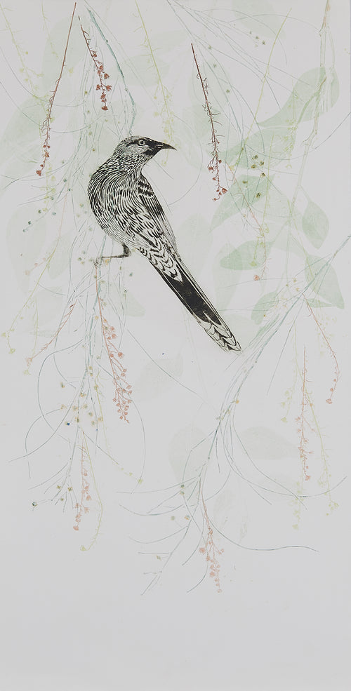 ARTWORK Wattlebird amongst the eucalyptus