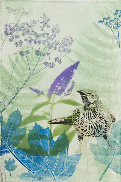 ARTWORK Wattlebird in amongst the Summer Lilac (buddleia)