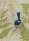 Greeting Card Willy Wagtail