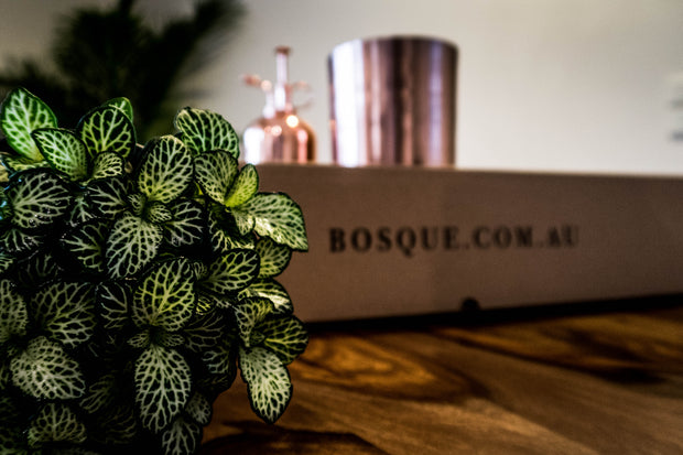 Box of Copper - Plant Gift Box - Bosque