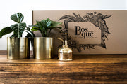 Box of Gold - Plant Gift Box - Bosque