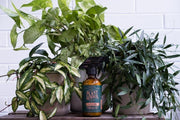 Neem Oil - Organic Leaf Shine - Bosque