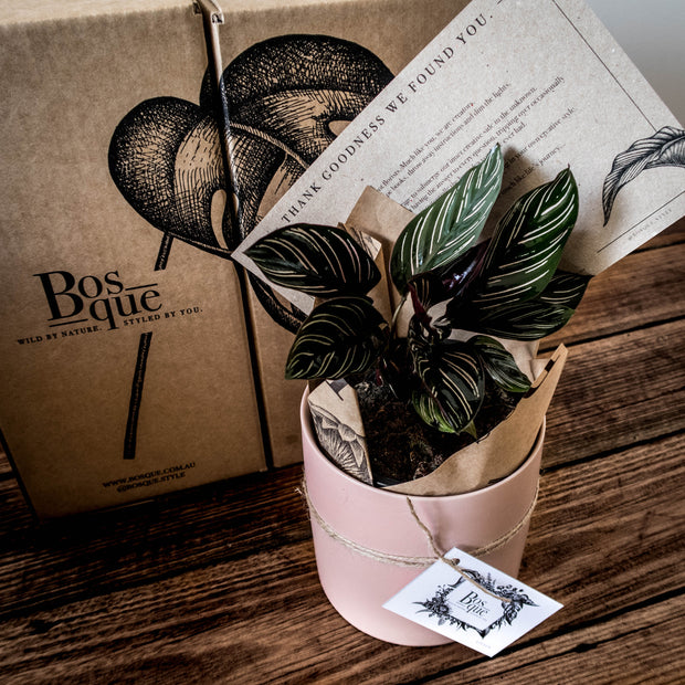 3 Month Plant & Accessory Subscription - Bosque