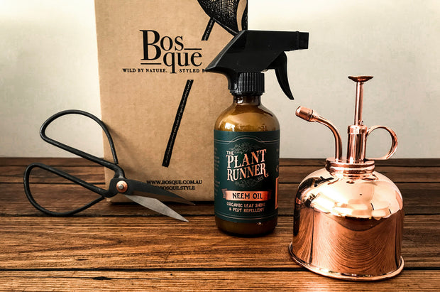 Plant Maintenance Gift Box - Bosque