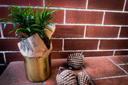 indoor plant gift delivery Melbourne Small, medium, large indoor plant pot