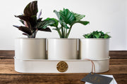 Sophie Conran Buttermilk Plant & Pot Trio - Bosque