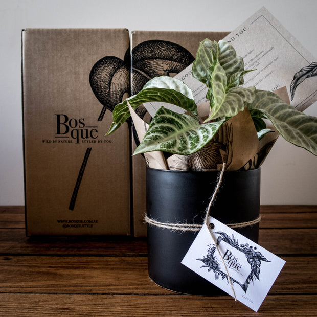 Indoor plant subscription