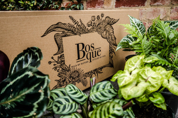 Plant Trio Green House Box - Bosque
