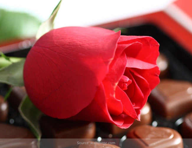 Rose Day: History And Significance Of Rose Colors