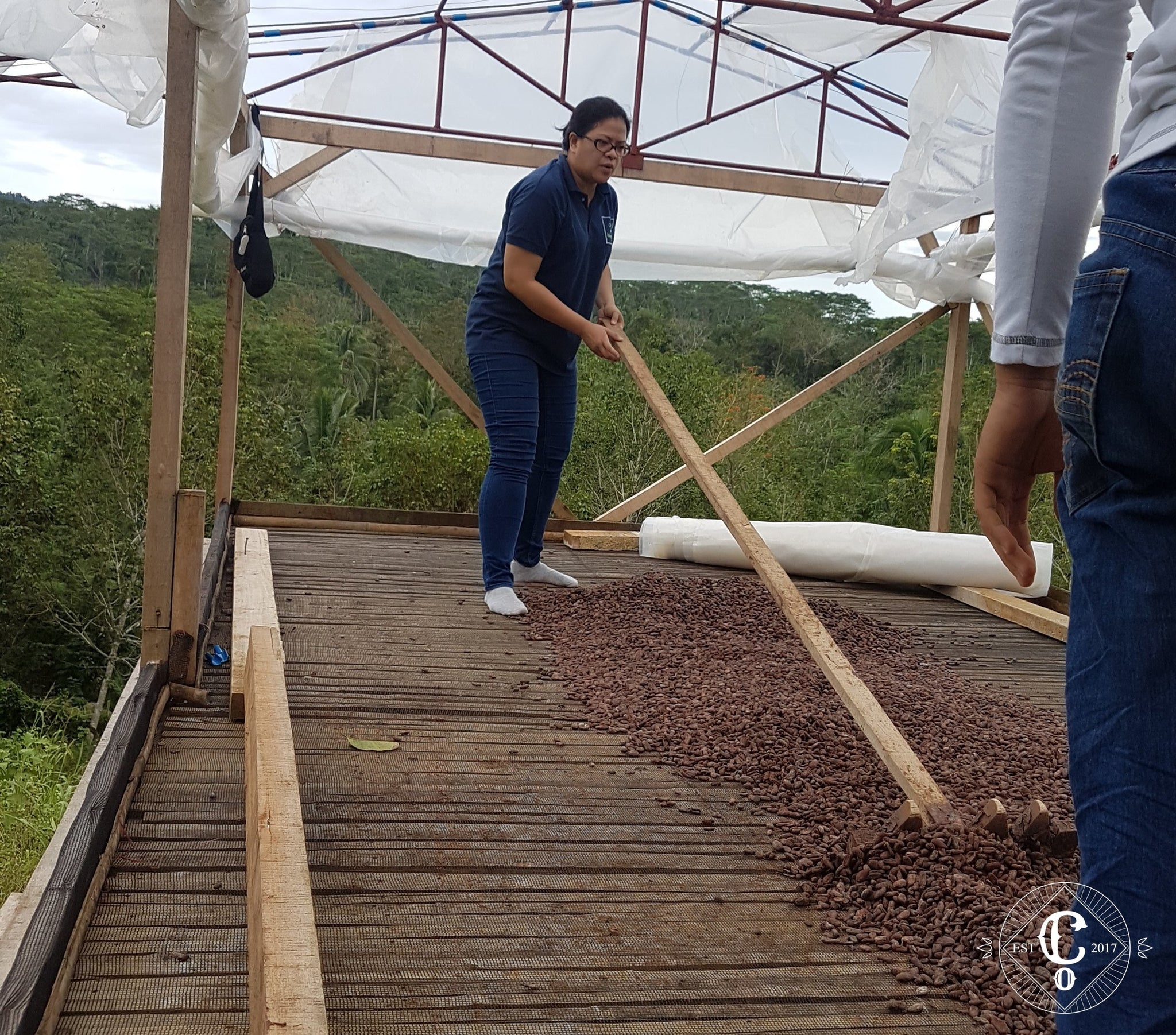 Co Chocolat cacao beans drying at the solar dryer