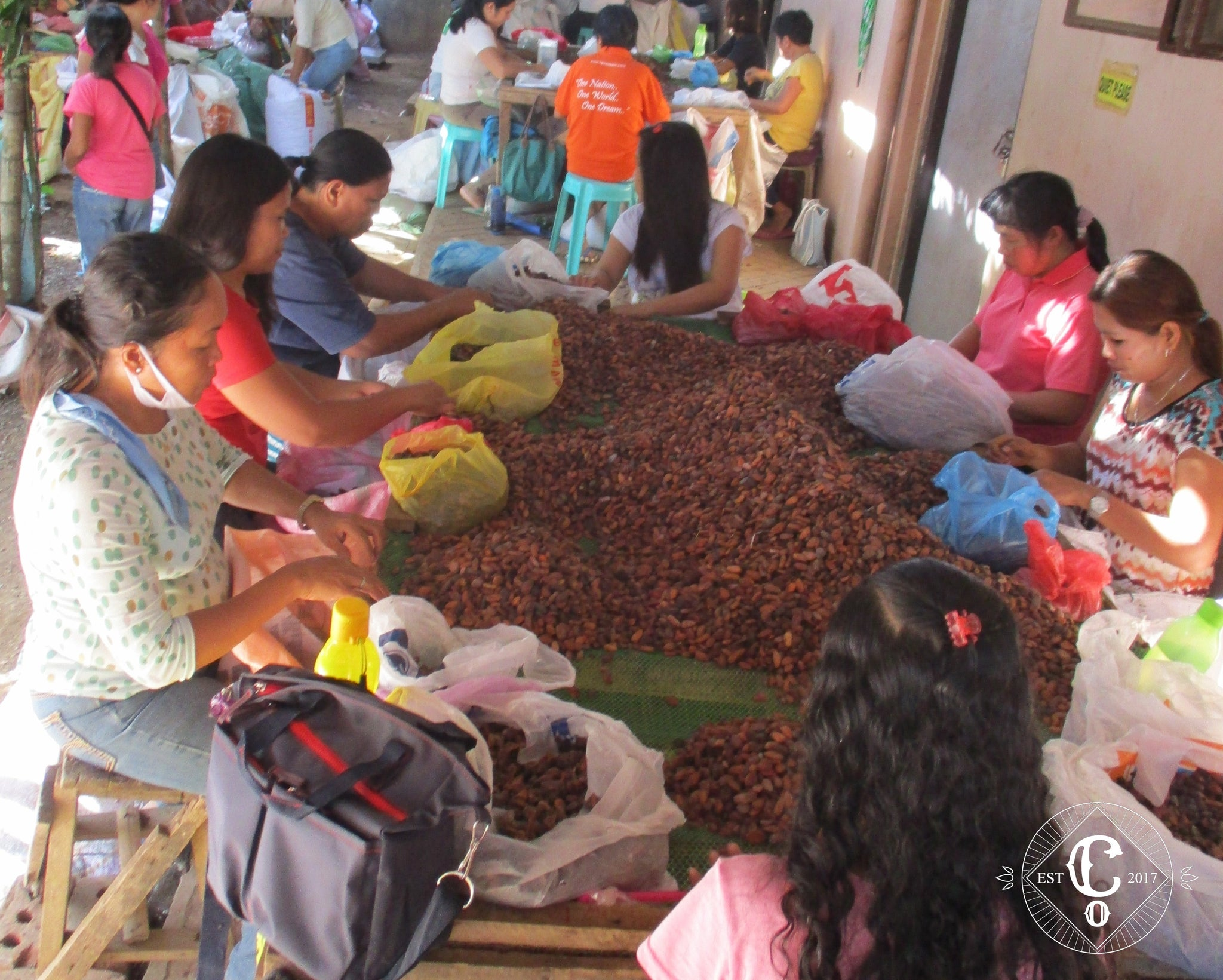 Co Chocolat Handsorting of cacao beans to be used for chocolate making