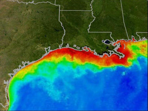 dead zone in the gulf