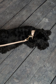 Leather Dog Lead, Natural - allwaggers.com