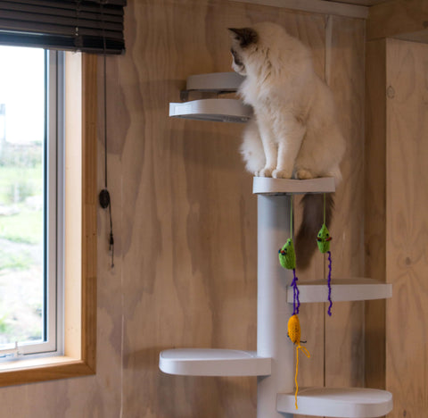 inside monkee tree scalable cat ladder