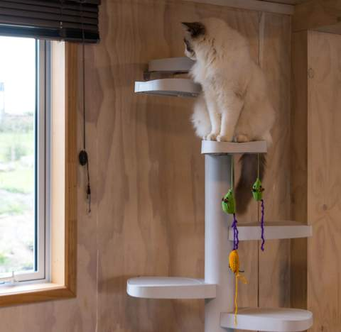 Climb on your indoor gym  with a Monkee Tree cat ladder