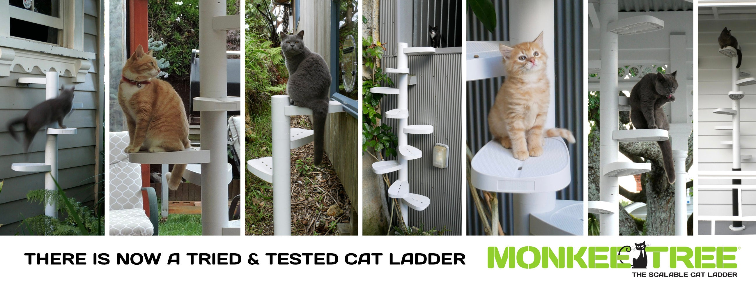 elevated cat door access with a Monkee Tree cat ladder