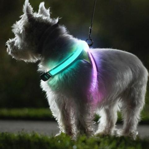 Lyssele LightHound