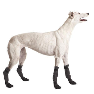 Greyhound with socks for greyhound