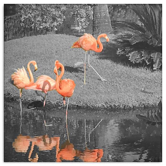 Pink Flamingos by Christopher Cerretani