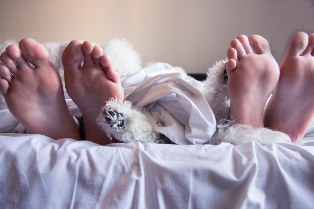 Bare feet and dog feet sticking out from under the sheet