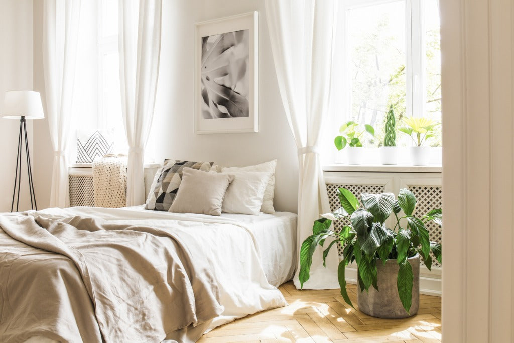 Plant next to bed with pillows and blanket under poster in bedroom interior with lamp