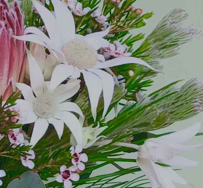 Native Bunch posy featuring Flannel Flowers