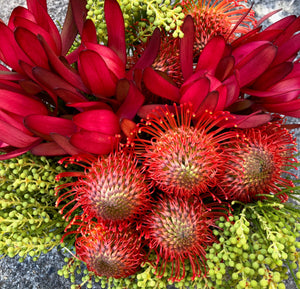 Native Bunch | Hakea -  Australia's Pincushion