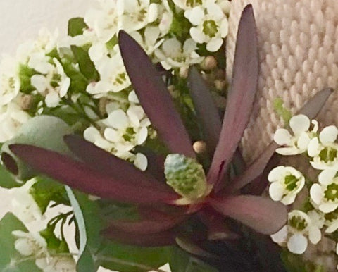 Native flower Sydney flower delivery by Native Bunch to Sydney Northern Beaches, North Shore and Inner West Proteas, Banksias & more!