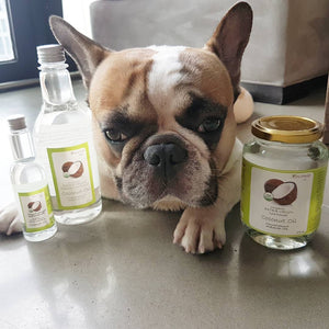 Koconae: Perfect Coconut Oil Quality for Pets