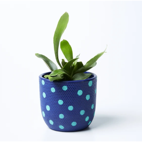 Spot Pot - Navy Mint