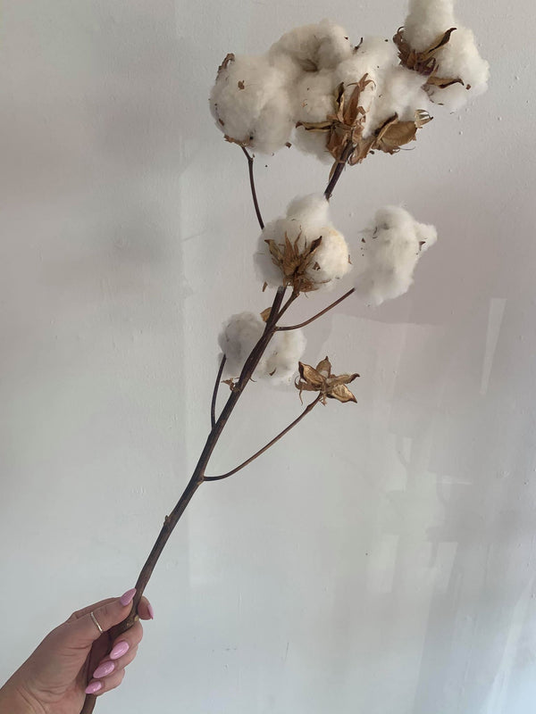 Cotton Stem