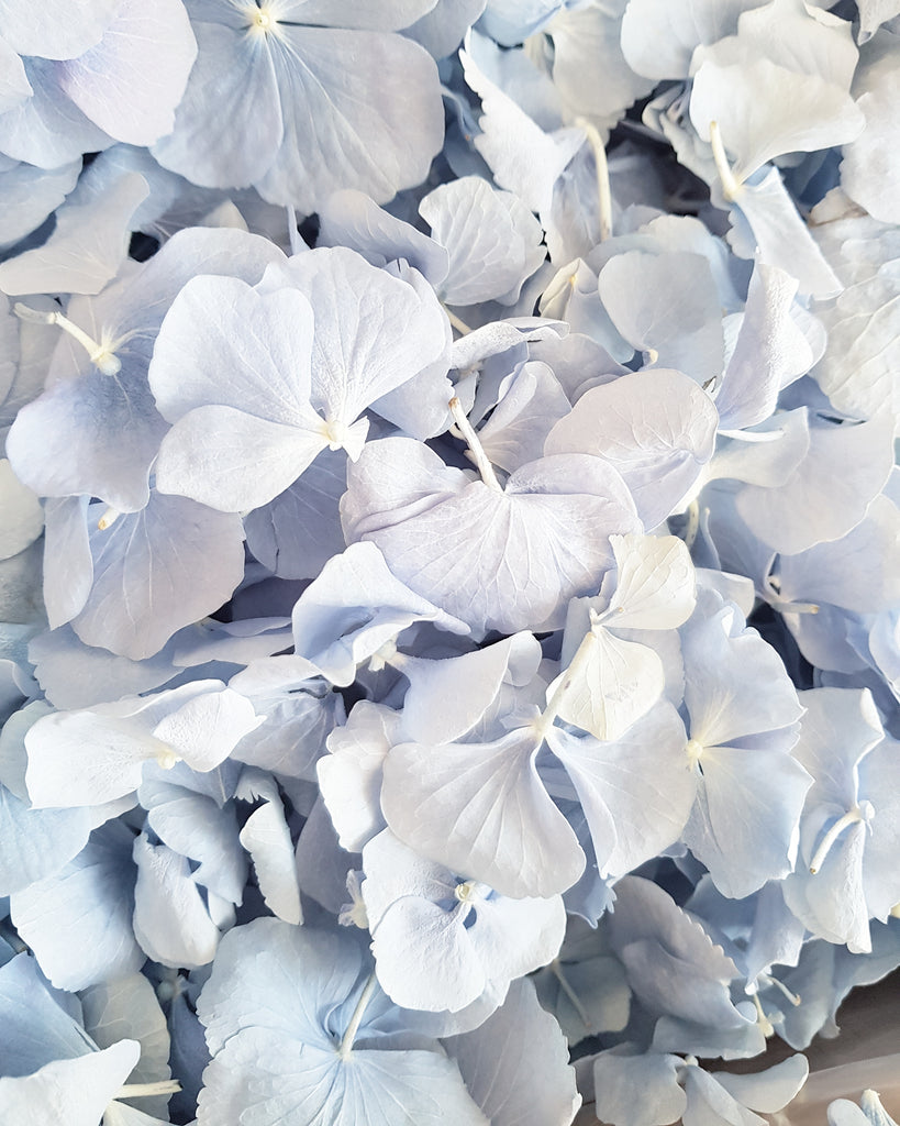 FREEZE HYDRANGEA PETAL - DUSTY BLUE