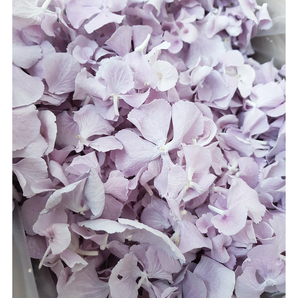 FREEZE HYDRANGEA PETAL - DUSTY PURPLE