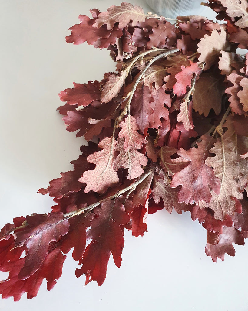 Oak tree leaves - Preserved - Red