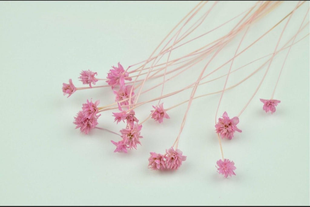 Dried Hill Flower - Pink