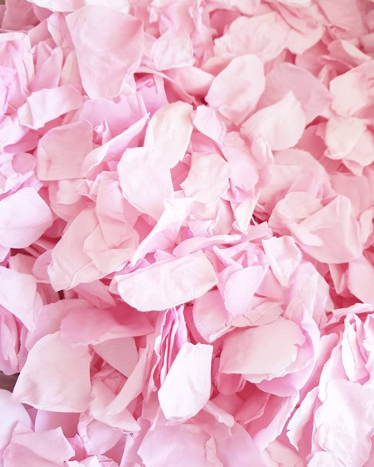 Freeze Real Rose Petal -Pink