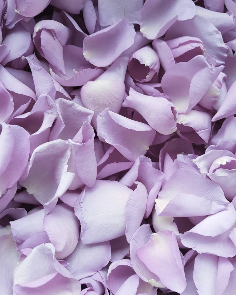 Freeze Real Rose Petal, Natural Purple REAL Flower petal