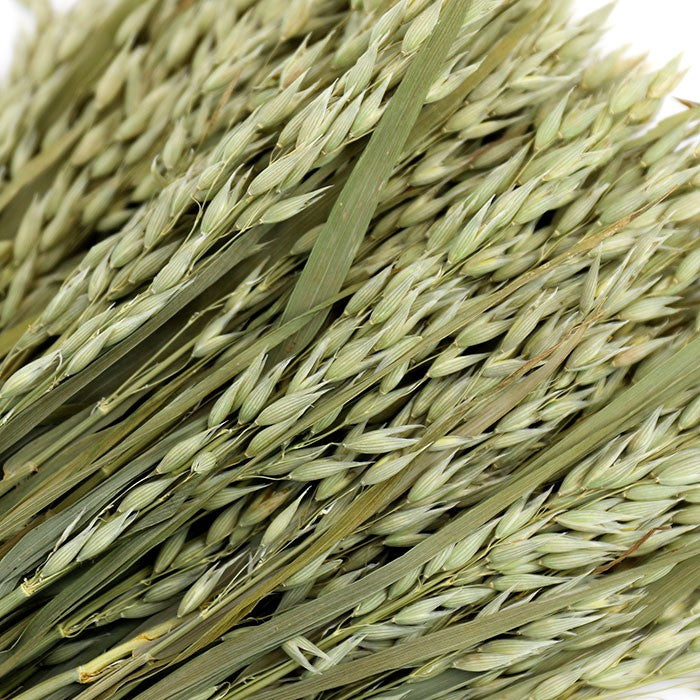 Oat grass - Green