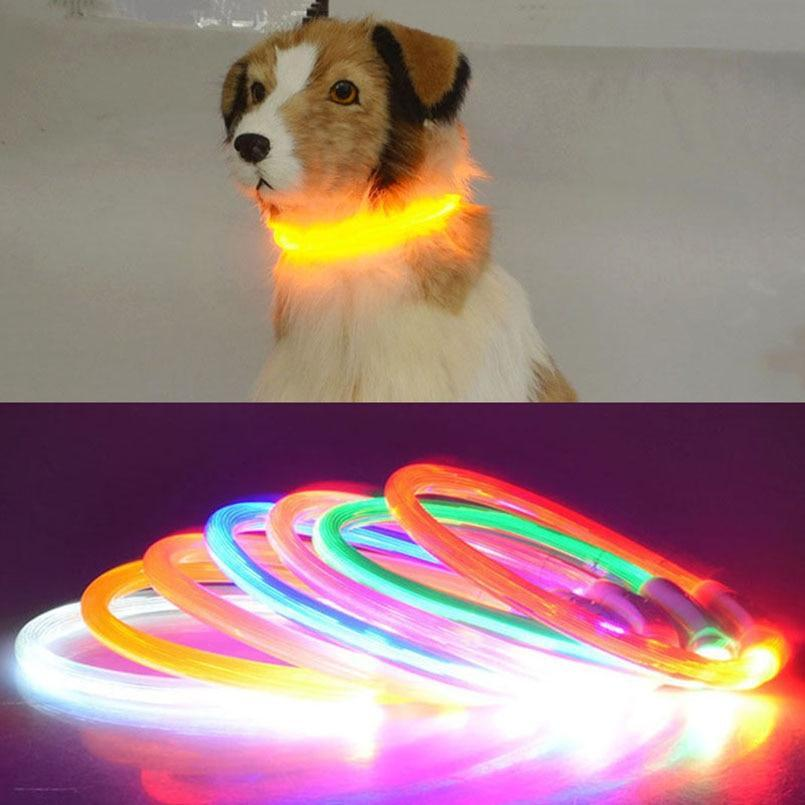 Safety : Collier lumineux à LED pour animaux collier Chimey's Paradise