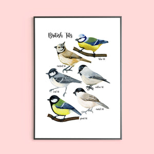 British Tits Illustrated Bird Print