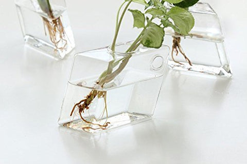 Wall Mounted Glass Vase 2 Pcs