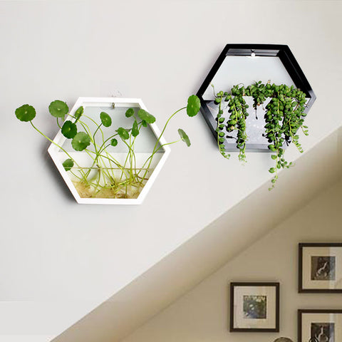 Polygon wall pots Flowers and plants