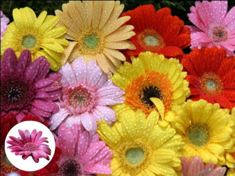 "10"" x 7.5"" Daisy Flower Cake Toppers Decorations on Edible Wafer Rice Paper"