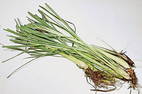 Lemongrass (Cymbopogon Flexuosus) Fresh Premium (8) Stalks