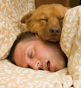 5 Signs that prove your dog is in love with you