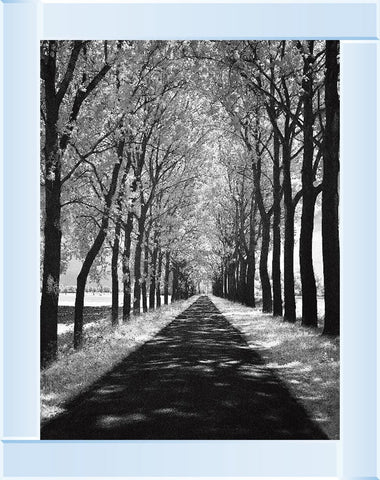 Trees In Winter Walkway Monochrome Picture by Final Touches