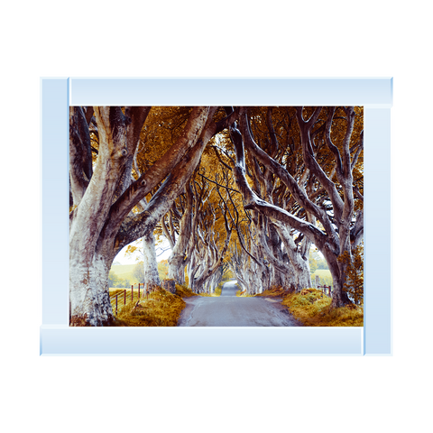 Dark Hedges Picture by Final Touches