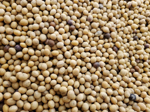 Organic Soybeans - Food Grade